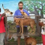 Small Dogs with Big Problems | Vet Clinic Gambia
