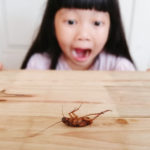 Roaches!   Why do we fear them?